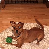 Adopt A Pet :: JOEY B - Toronto, ON