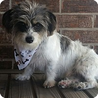 Adopt A Pet :: Buddy - Yukon, OK