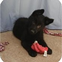 Adopt A Pet :: Sparkle ADOPTED!! - Antioch, IL