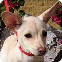 Adopt A Pet :: Zeeva - Gilbert, AZ