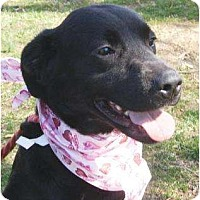 Adopt A Pet :: Juno - in Maine! - kennebunkport, ME