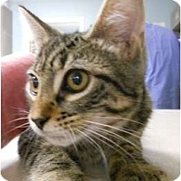 Adopt A Pet :: Huffy - Maywood, NJ