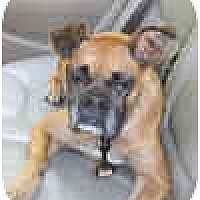 Adopt A Pet :: Henrietta - Sunderland, MA