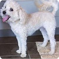 Adopt A Pet :: Jake - Mooy, AL