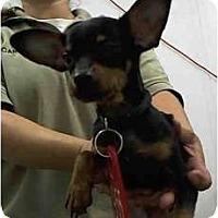 Adopt A Pet :: Cuba - Seattle, WA