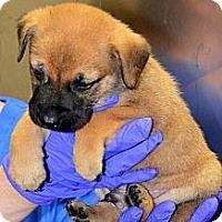 Adopt A Pet :: Sky - Ft. Lauderdale, FL