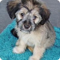 Adopt A Pet :: Juneau - La Habra Heights, CA