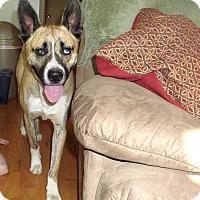 Adopt A Pet :: Bruce - Chewelah, WA