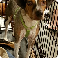 Hound (Unknown Type) Mix Dog for adoption in Alexis, North Carolina - Rodger