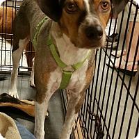 Adopt A Pet :: Rodger - Alexis, NC