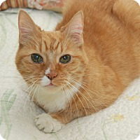 Where Can I Bring My Cat For Adoption In Nj
