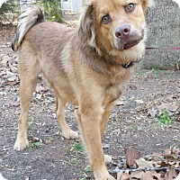 Adopt A Pet :: Hamlet - Capon Bridge, WV