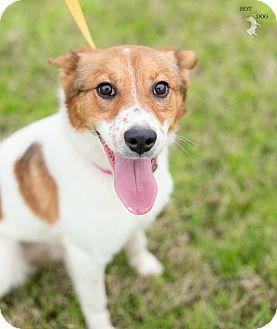 Border Collie/Sheltie, Shetland Sheepdog Mix Dog for adoption in Folsom, Louisiana - Trixie