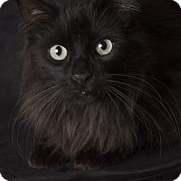 Adopt A Pet :: Squeakers - Gilbert, AZ