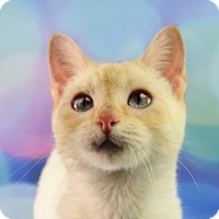 Adopt A Pet :: Kennedy - Carencro, LA