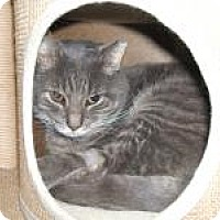 Adopt A Pet :: Smokey - Manchester, CT