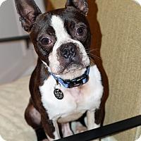 Adopt A Pet :: Ranger - Atlanta, GA