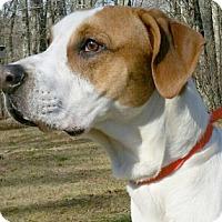 Adopt A Pet :: Samson - Canterbury, CT