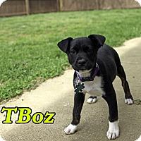 Adopt A Pet :: T-Boz - Alpharetta, GA