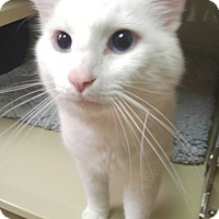 Adopt A Pet :: Channing - New Castle, PA