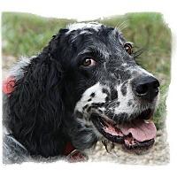 Adopt A Pet :: ANNIE - Pine Grove, PA