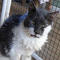 Adopt A Pet :: Fedora - Penndel, PA