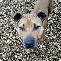 Adopt A Pet :: lil vicky - East McKeesport, PA