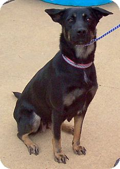 German Shepherd Dog Mix Dog for adoption in Mechanicsburg, Pennsylvania - Olivia
