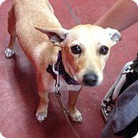 Adopt A Pet :: Sunny - Tehachapi, CA