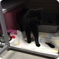 Adopt A Pet :: Blunder - Janesville, WI
