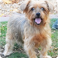Adopt A Pet :: Brisco - Huntington, NY