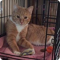 Adopt A Pet :: Ricky - Columbus, OH