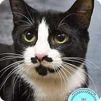 Adopt A Pet :: Mustache - Staten Island, NY