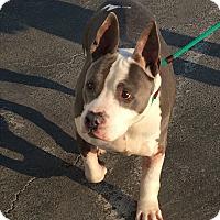 Adopt A Pet :: Petey - Manteca, CA