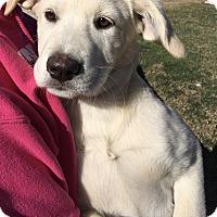 Adopt A Pet :: Marta - Buda, TX