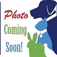 Adopt A Pet :: Bert - Alexandria, VA