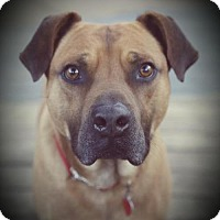 Adopt A Pet :: Johnny Sacks - Barrington, RI