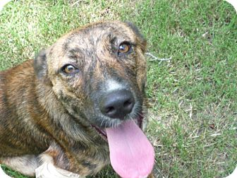 Catahoula Leopard Dog Mix Dog for adoption in Pointblank, Texas ...