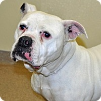 Adopt A Pet :: Betsy - Port Washington, NY