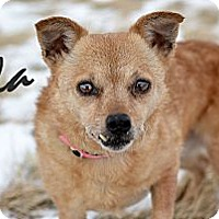 Adopt A Pet :: Lola - Cheyenne, WY