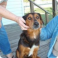 Adopt A Pet :: Ginger - Russellville, AR