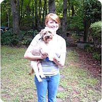 Adopt A Pet :: Fabio - Mocksville, NC