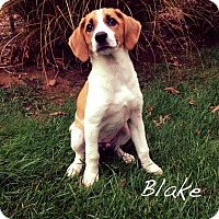 Adopt A Pet :: Blake - Southington, CT