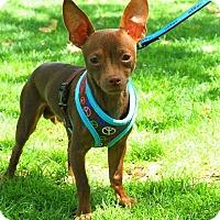 Adopt A Pet :: JACKSON - Rancho Cucamonga, CA
