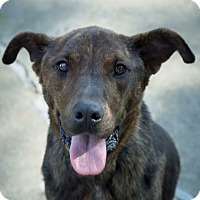 Adopt A Pet :: Claire-Adopted! - Detroit, MI