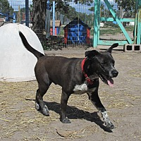 Adopt A Pet :: Benny - Pie Town, NM
