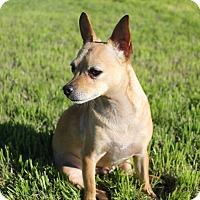 Adopt A Pet :: Nilo - Buckeye, AZ