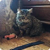Adopt A Pet :: Ryan - Albany, NY