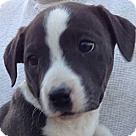 Adopt A Pet :: Oona (10 lb)