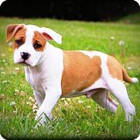 Adopt A Pet :: Porky~adopted! - Glastonbury, CT